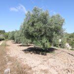 CD262694-Finca-in-Moraira-03